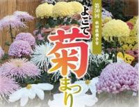 第50回よこて菊まつり(10/27~11/5)