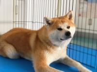 秋田犬に会える♪